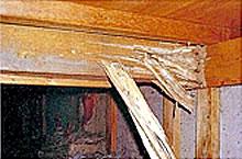 床下木部被害(保証切7ヶ月後)